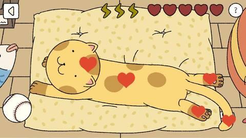 cách chăm sóc mèo