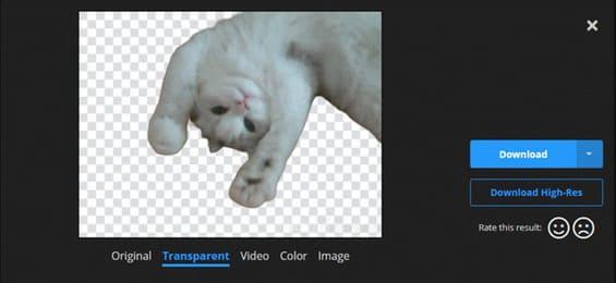 Transparent background video