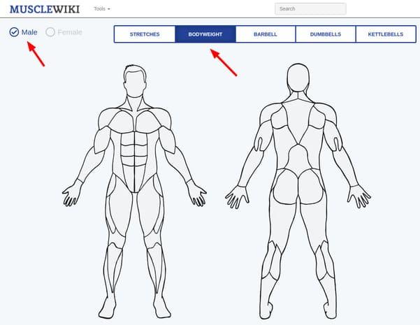 Cách chọn bài tập theo nhóm cơ trên MuscleWiki